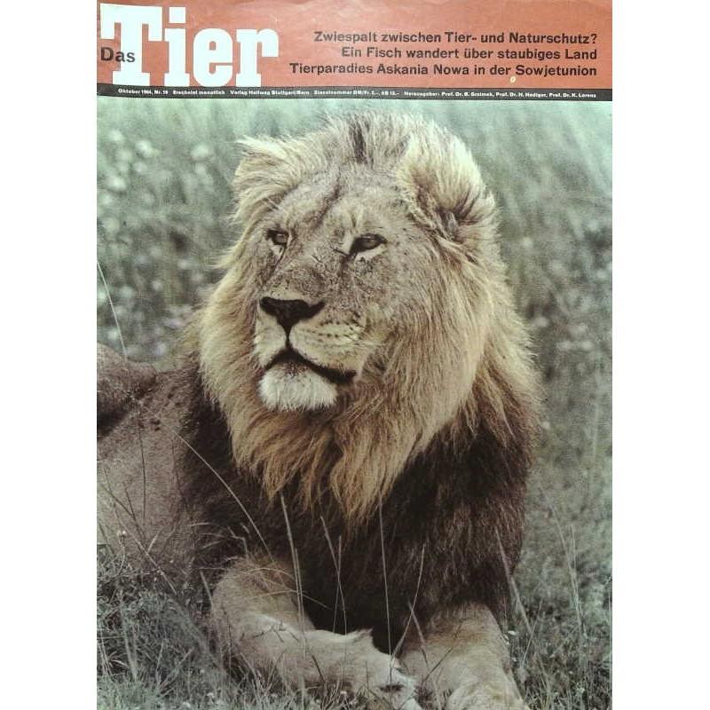 Das Tier Nr.10 / Oktober 1964 - Afrikanischer Löwe