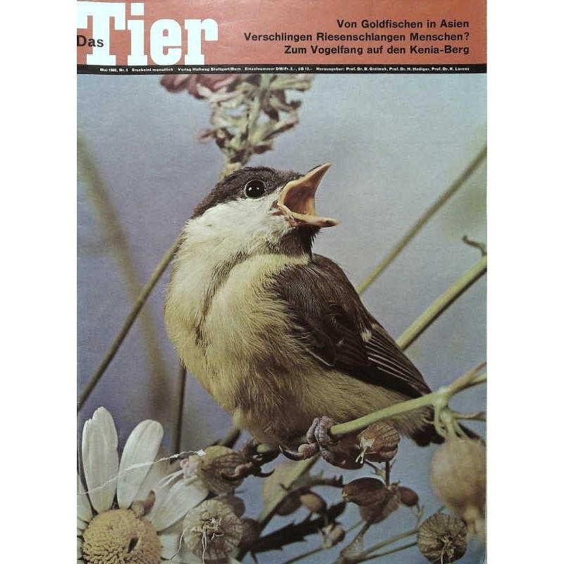 Das Tier Nr.5 / Mai 1965 - Kohlmeise