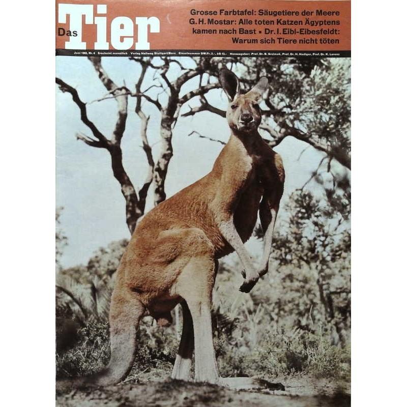 Das Tier Nr.6 / Juni 1965 - Rotes Riesenkänguruh