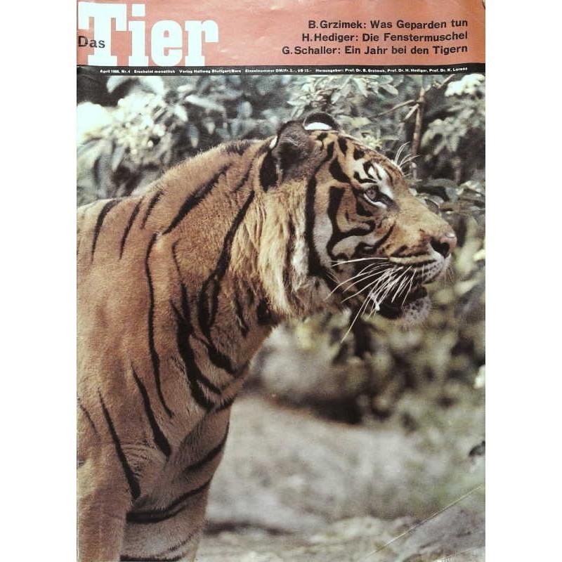 Das Tier Nr.4 / April 1966 - Sumatra Tiger
