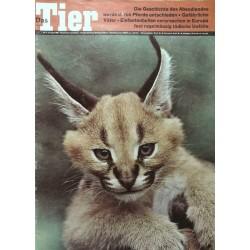Das Tier Nr.8 / August 1963 - Wüstenluchs