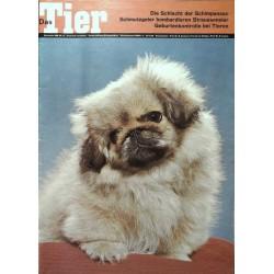 Das Tier Nr.12 / Dezember 1968 - Junger Pekinese