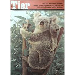 Das Tier Nr.3 / März 1968 - Koalamutter mit Kind
