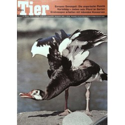 Das Tier Nr.6 / Juni 1968 - Sporengans