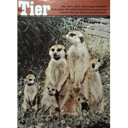 Das Tier Nr.12 / Dezember 1967 - Erdmännchen