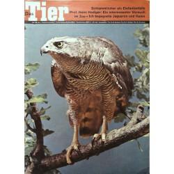 Das Tier Nr.5 / Mai 1968 - Habicht