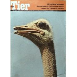 Das Tier Nr.8 / August 1968 - Afrikanischer Strauss