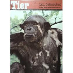 Das Tier Nr.1 / Januar 1968 - Schimpansin