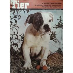Das Tier Nr.3 / März 1966 - Englische Bulldogge
