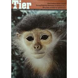 Das Tier Nr.9 / September 1968 - Kleideraffe