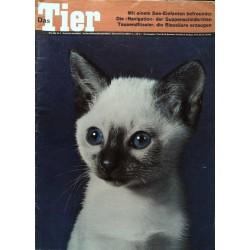 Das Tier Nr.5 / Mai 1966 - Junge Siamkatze