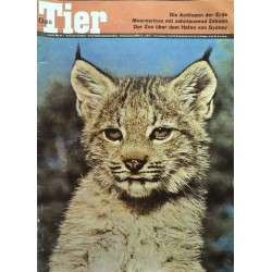 Das Tier Nr.1 / Januar 1965 - Junger Luchs