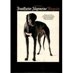Frankfurter Allgemeine Heft 65 / Mai 1981 - Greyhounds